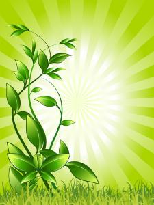 plant-158798_960_720