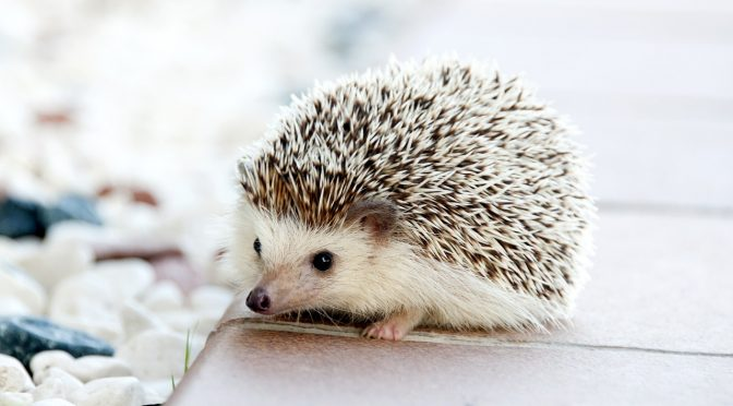 The 5 Best Exotic Pets