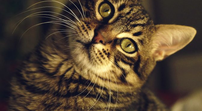 How Do Cats See Our World?